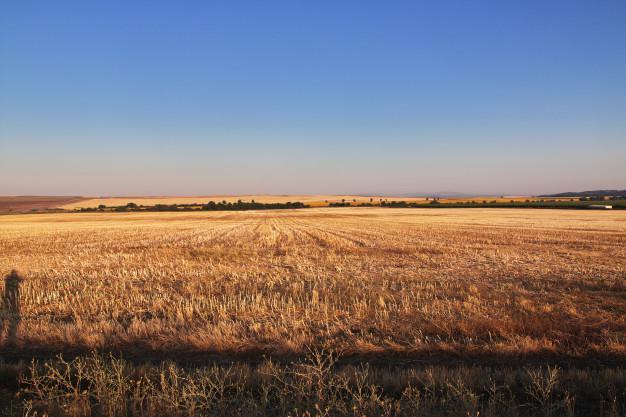 vista-campos-bulgaria