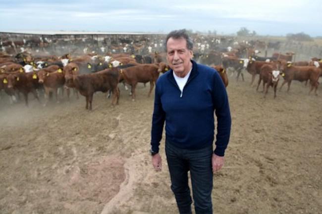 brito-y-vacas-1
